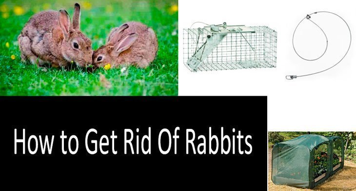 How to Get Rid Of Rabbits 1 The Bunny Buster: Best Air Rifle For Rabbits (2020)