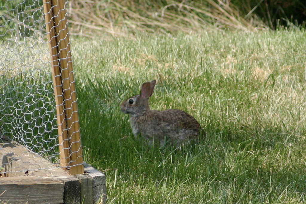 fence 1 The Bunny Buster: Best Air Rifle For Rabbits (2020)