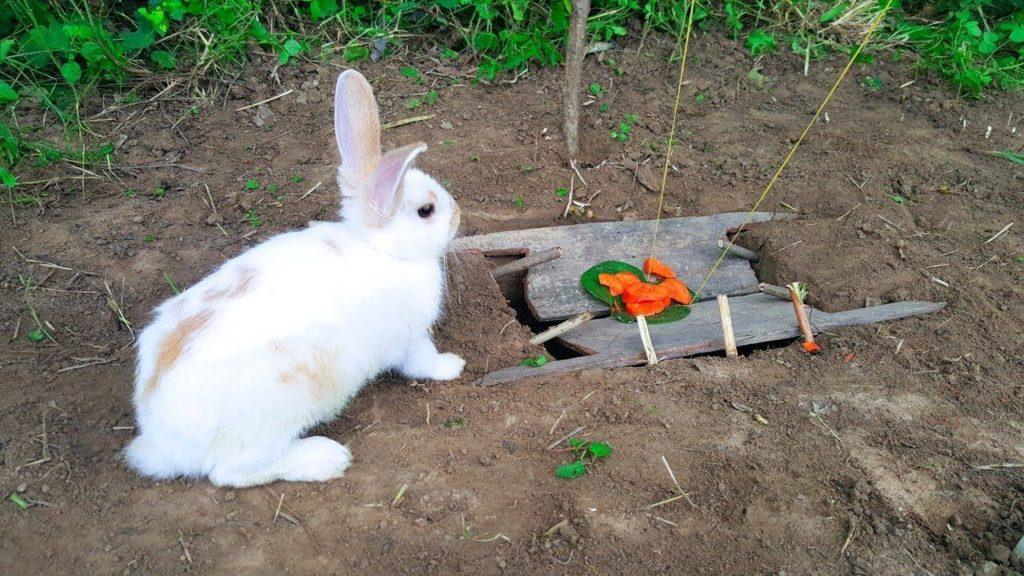 rab1 1 The Bunny Buster: Best Air Rifle For Rabbits (2020)