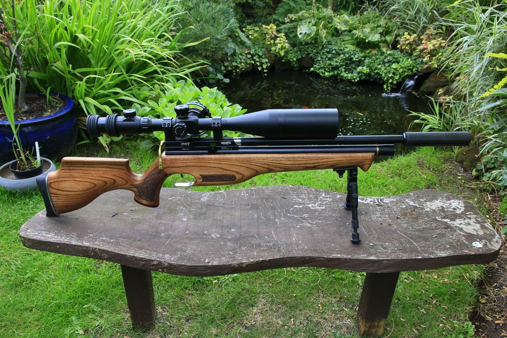 c5 Gamo Coyote Review – Accuracy At Its Finest!